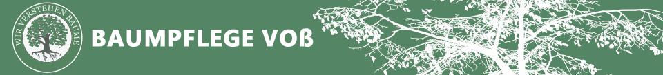 Wir verstehen Bäume | Baumschutz • Baumpflege • Baumfällung